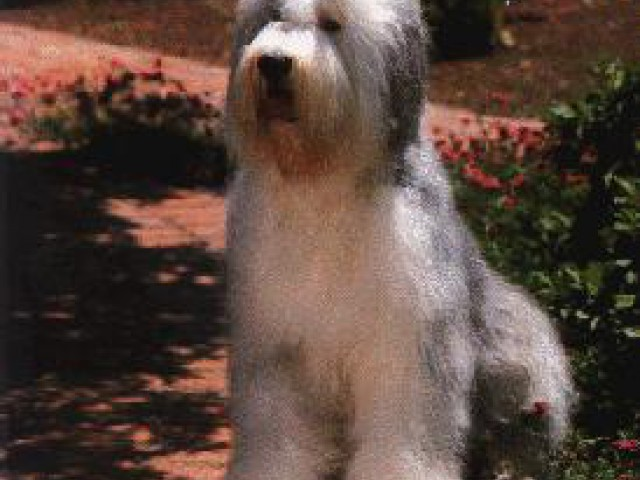 Cães recuperam presidiárias e auxiliam deficientes