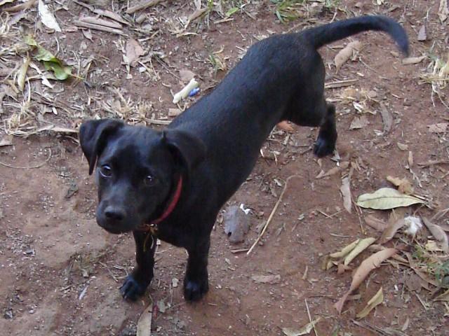 Aprovadas em Santos-SP importantes leis visando dar qualidade de vida aos animais