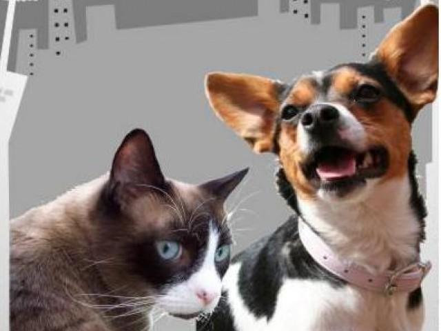 Dia Nacional de Adotar um Animal é sinônimo de conscientização