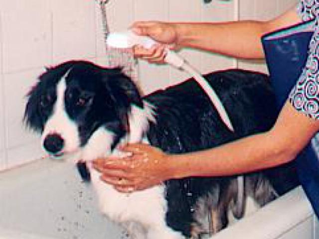 Hora do banho , um momento muito especial para o animal !