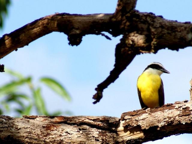 O impacto do ecoturismo sobre a fauna e flora