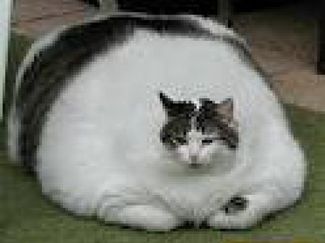 Lançada linha de rações para pets diabéticos e obesos