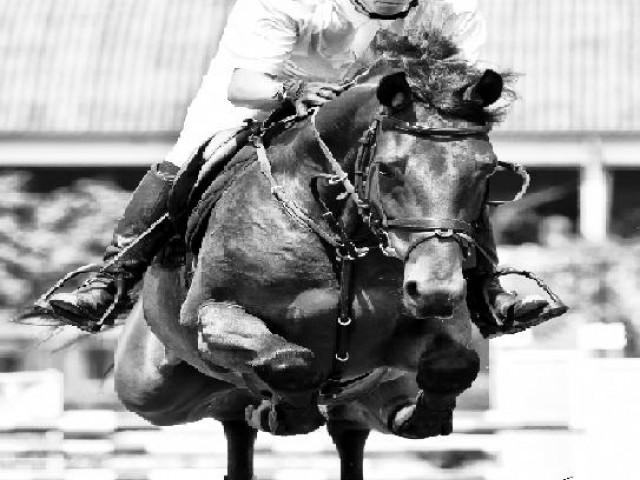 O cavaleiro brasileiro Yuri Mansur desembarcou em Copenhagen para o concurso internacional de salto