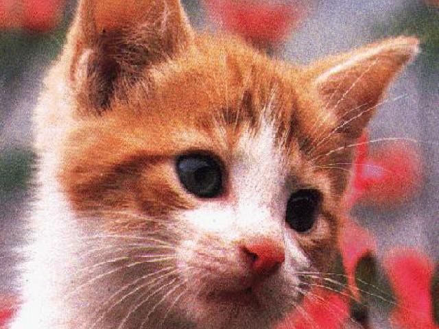 Os gatos conquistaram a sociedade superando as crendices