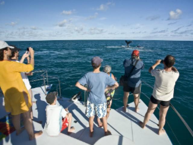 Baleias jubartes são avistadas em Abrolhos